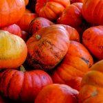 Pumpkin designs for an ACE Halloween
